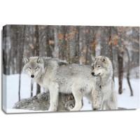Wolf - Disturbed