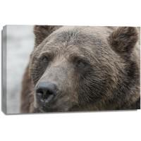 Bear - Tough day