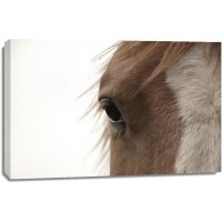Horse - Brown Wanderer