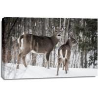 Deer 0- Mother's Love