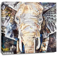 James Grey - Elephants Gaze