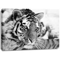 Ivan Cholov - Tiger