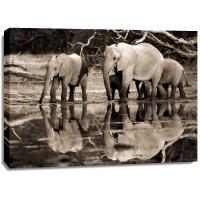 Frank Krahmer - African elephants, Okavango, Botswana