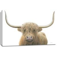 James Wiens - Highland Cow