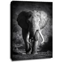 Johanna Siri - Elephant Bull