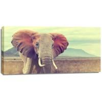 Monica P?l - Elephant - Wild