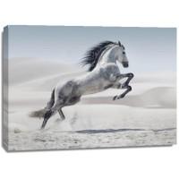 Jocelyn Borivoj - Horse - White On White
