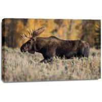 Jeff Schultes - Bull Moose