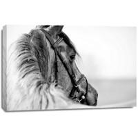 Felicia Roy - Black-In-White Of A Sports Stallion